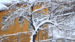 Tree in snow Focus-in. Gentle snow falling on trees Stock Footage