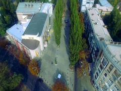 Tree alley. Long flight above Tree alley. Color-graded version Stock Footage