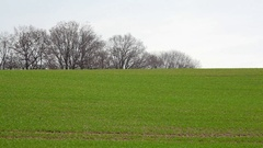 Green rolling hill grass field, trees in background, winter, Germany Stock Footage