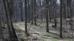 Dirt road path in scary forest, winter time, Germany Stock Footage