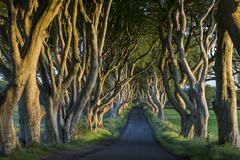 The Dark Hedges - County Antrim - Northern Ireland Stock Photos