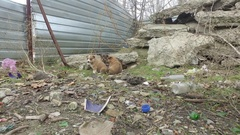 Stray dogs puppies among concrete slabs in an abandoned construction site 4k Stock Footage