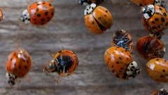 Collection of ladybirds on wooden background Stock Footage