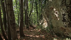 Steady cam shot, walking on track to old Unesco tomb in the forest Stock Footage