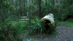 Dandenong Ranges Park: Tree Trunk in the Forest, Mount Dandenong Sign Stock Footage
