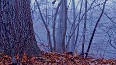 Eerie Woods 07 HQ Stock Footage