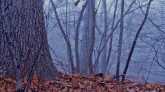 Eerie Woods 07 MP4 Stock Footage