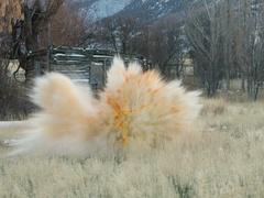 Pumpkin blast explosion rural farm fun slow motion DCI 4K Stock Footage