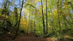 Moving Along the Beech Fields in Early Autumn Stock Footage