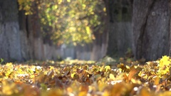 Yellow fallen leaves on park alley ground detail, autumn nature scenery Stock Footage