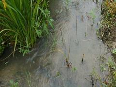Gyeongsan, Korea, Irrigation canal scene in raining day Stock Footage