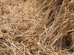 Gyeongsan, Korea, A Sheaf of paddy rice field after cultivate Stock Footage