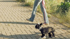 Woman with little funny dog outdoors Stock Footage