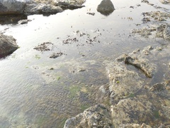 Sea rock at east sea in south korea Stock Footage
