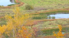 Scenic autumn landscape with colourful trees, grass and other vegetation. Stock Footage