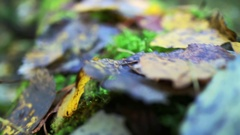 Extremely small depth of field. Forest floor in autumn forest. Beautiful theme Stock Footage