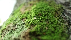 Climbing on the trunk of a tree. Extremely small depth of field.  Stock Footage