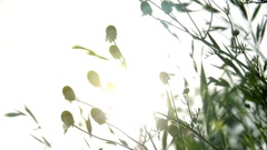 Plants and Flowers receiving Sun Stock Footage