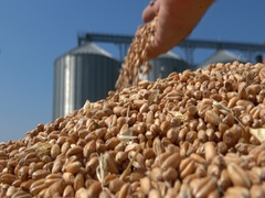 Wheat in the hand after harvest ,silos storage agriculture Stock Footage