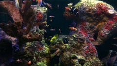 A Variety Fish in different colours including clown fish in Large Aquarium Stock Footage