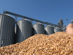 Wheat in the hand after harvest ,silos storage  Stock Footage