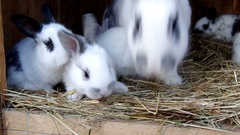 Rabbits in the rabbit hutch Stock Footage