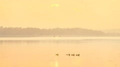 Ducks swimming on the quiet lake at sunrise Stock Footage