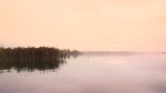 Sunrise on the quiet lake and cane thicket Stock Footage