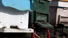 Bee Hives on the Ground. Working Bees Carry Honey to Old Wooden Hive Stock Footage