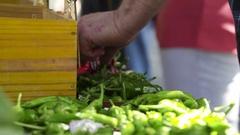 Farmers Market Stock Footage