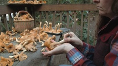 Woman Cleaning Chanterelles Stock Footage