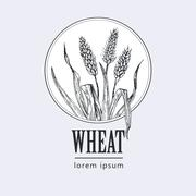 Bakery vintage bread or beer logo with wheat Stock Illustration