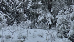 Winter Taiga impenetrable forest, Stock Footage