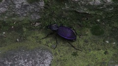 Insect in the area of the Black Sea coast Stock Footage