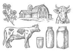 Set Milk farm. Cow head, clover, box carton package, glass and bottle. Stock Illustration