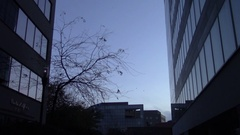 Urban landscape at dusk - Glass buildings and a naked tree - Steady camera Stock Footage