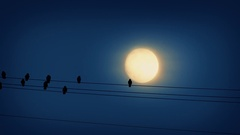 Bird Lands On Wire In Front Of Moon Stock Footage