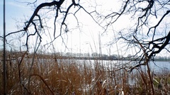 Dolly in reed grass on lake shore, Germany Stock Footage