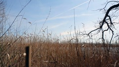 Dolly in to reed grass on lake shore, Germany Stock Footage