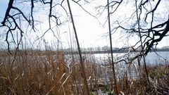 Dolly left reed grass on lake shore, Germany Stock Footage