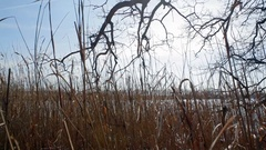 Dolly in to dry reed grass on lake shore, Germany Stock Footage