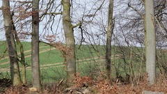 Green pasture field view from the forest, Germany Stock Footage