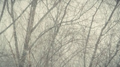 Strong snowstorm 1 Stock Footage
