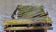 Decaying broken rotting boat dock on lake in the forest, Germany Stock Footage