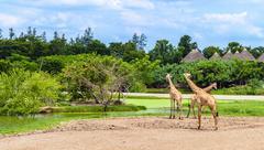 Safari World park Stock Photos