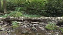 Fallen Log running along Dunnfield Creek Stock Footage