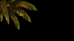 The branch of palm, palm tree in the wind. Stock Footage