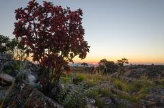 Sunset at Tundavala on Angolan plateau with soft light and red bush Stock Photos
