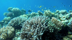 Ocean, Tropical fish and coral reef. Underwater life in the ocean. Stock Footage