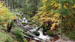 Stream of water in the wild forest at fall. Karkonosze National Park, Poland Stock Footage